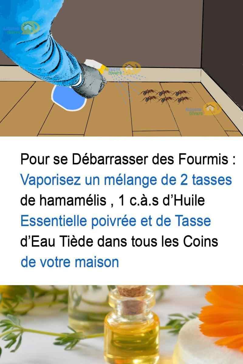 Astuces Naturelles Pour Se Débarrasser Des Fourmis insecticide naturel pour se débarrasser des mouches et des