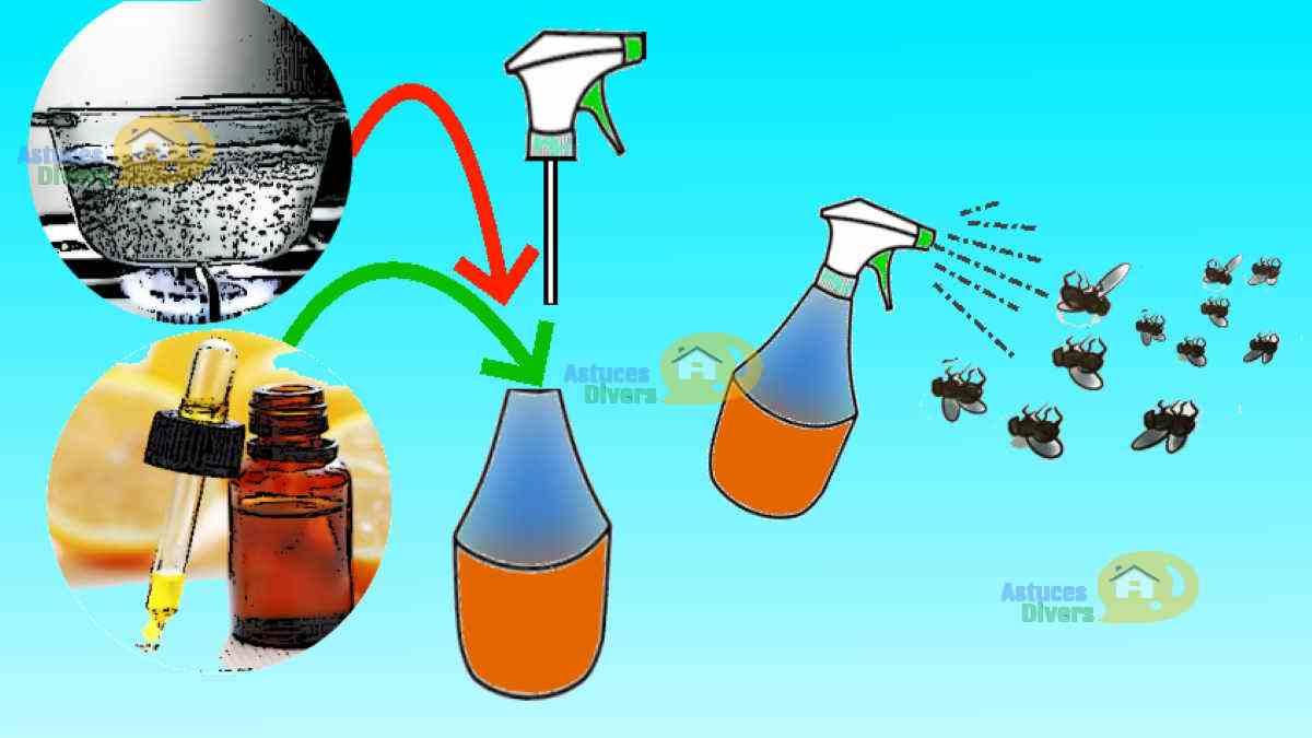 Comment Se Débarrasser De Moucherons Naturellement insecticide naturel pour se débarrasser des mouches et des